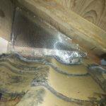 コウモリ侵入屋根裏