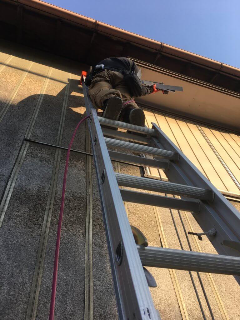 コウモリ対策はしご作業