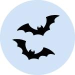 家に住み着くコウモリの種類とコウモリの生態