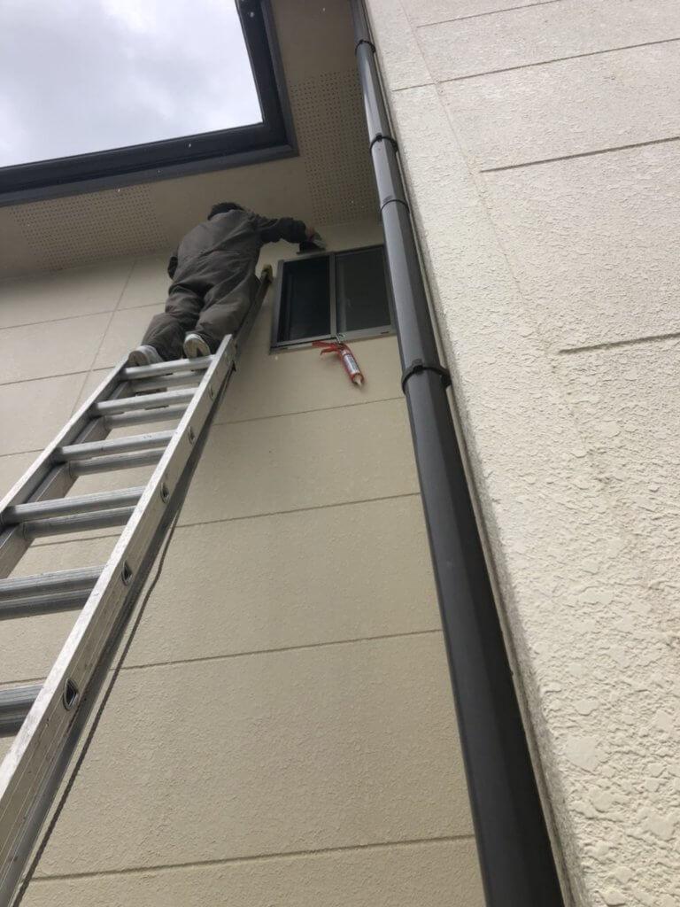 大阪のコウモリ駆除